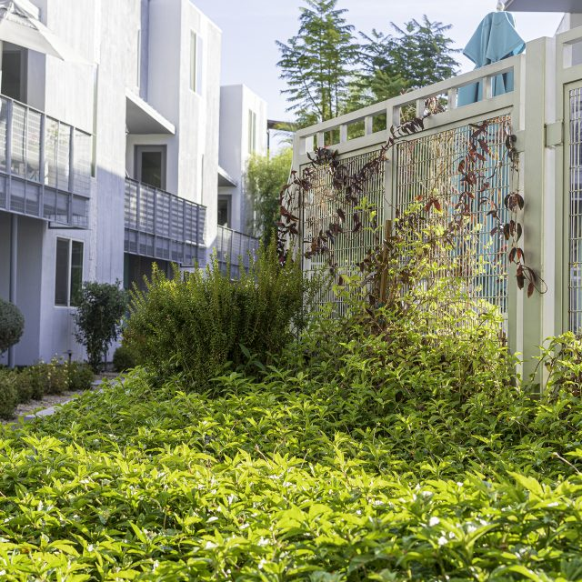 Novella at Biltmore - Commercial Landscape Phoenix